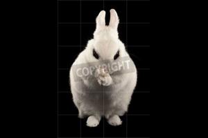plotting bunny